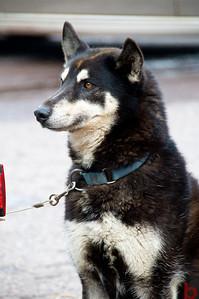 copperdog150 2010 175515