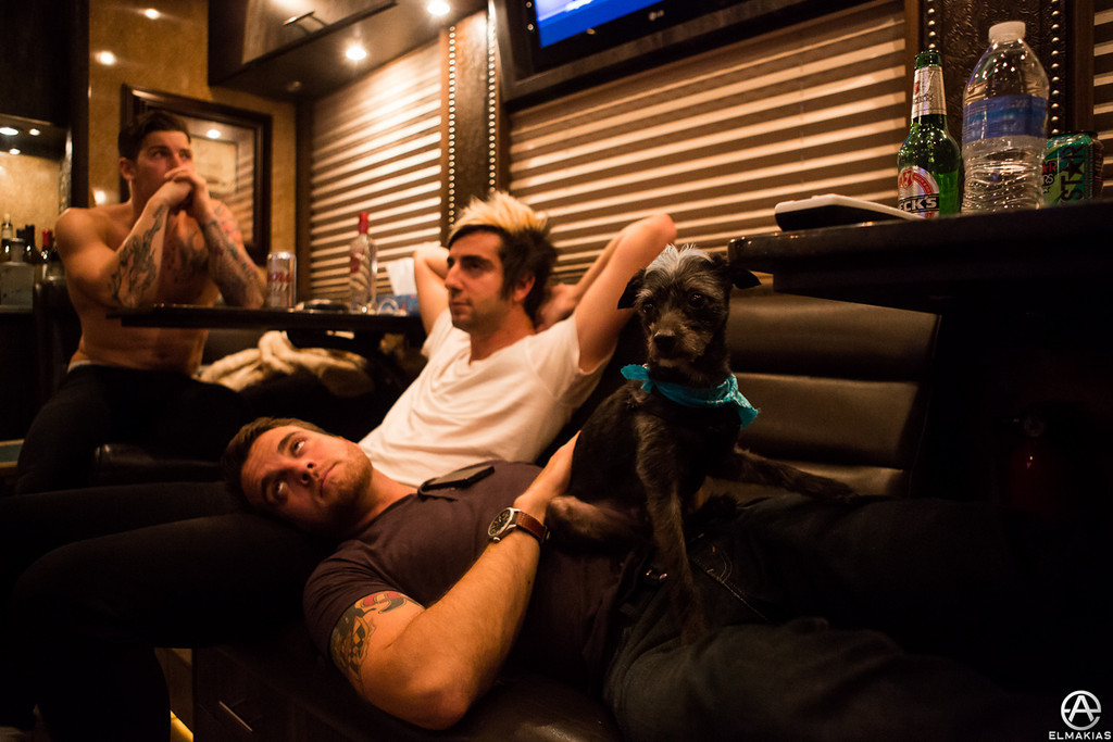 All Time Low, dog