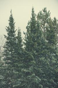 Ski Tigers Lakeland Invitational 121614 163258
