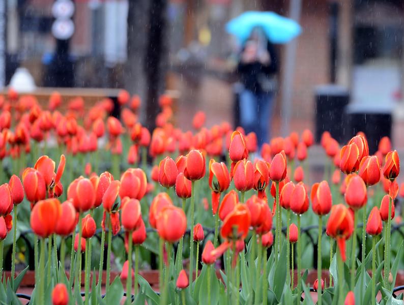 Boulder Rain April 26, 2015