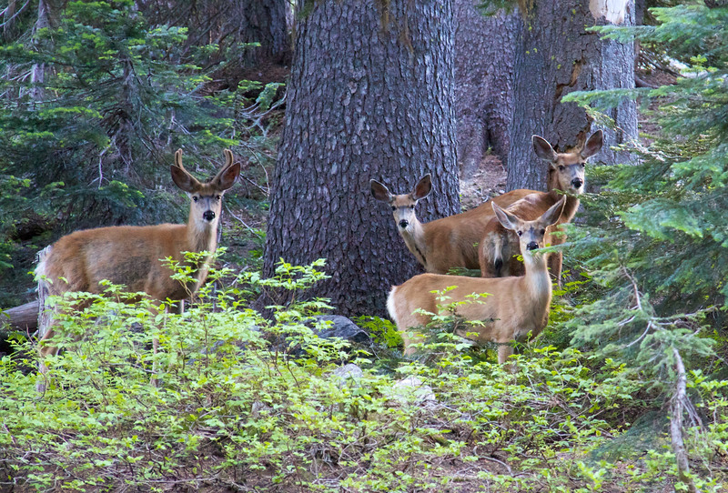 We saw about 10 deer in one group at Holden Lake.  Very cool.