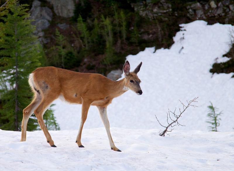 Deer at camp.