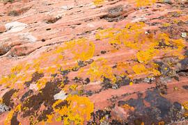 lichen sampler
