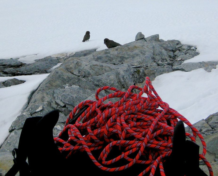 At Bevan Col we get the ropes out for the keas to check.