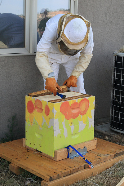 Mike opening up the bee box.