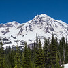 Tahoma comes into view from Indian Henry's Hunting Ground