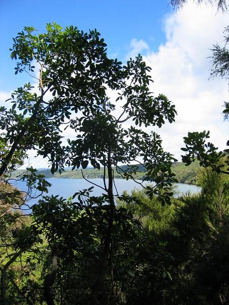 Kawakawa Bay Rock Climbing