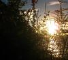 Sunset at Kawakawa Bay