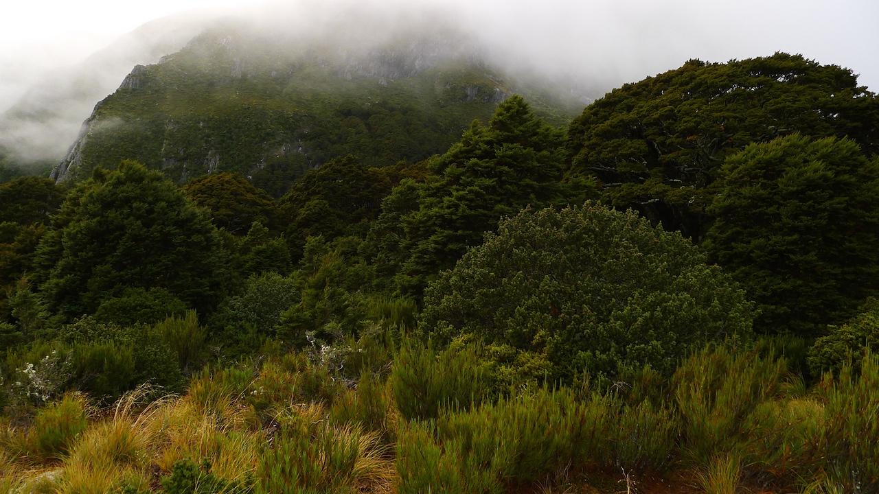 Forest near Brodrick Hut