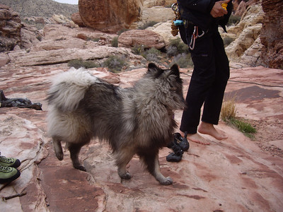 Keeshond that someone had at the crag.  His name was Shale.
