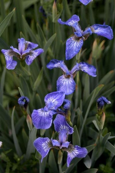 I-CO-Blue_Garden-McDonaldJ jpg