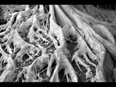 I-BW-Root_Canals-ProkopS