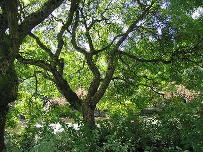 I-CO-Tree-Maitland-WhitelawB