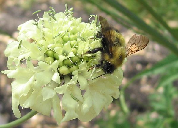 I-CO-Bee-Maitland-WhitelawB