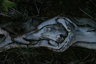 A-CO-Art_in_Nature-EllisV-jpeg