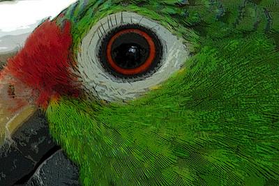 I-CR-_Parrot_Eyelashes-_GauntlettM