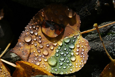 I-CO-_Autumn_Dew_Drops-_GauntlettM