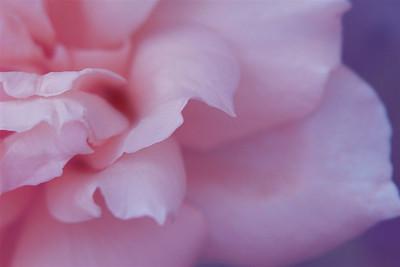 I-CR-Elegantly__Pink-McDonaldJ jpg