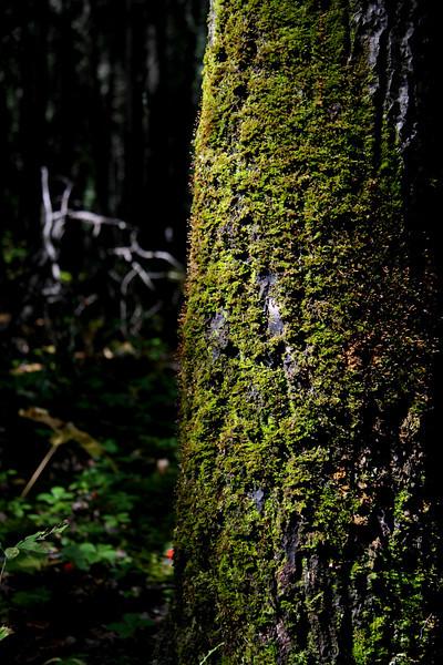 I-CO-Treescape_Waskeseu-McintoshD
