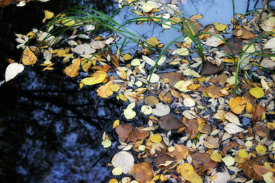 I-CO-Floating_Leaves-HoffotA