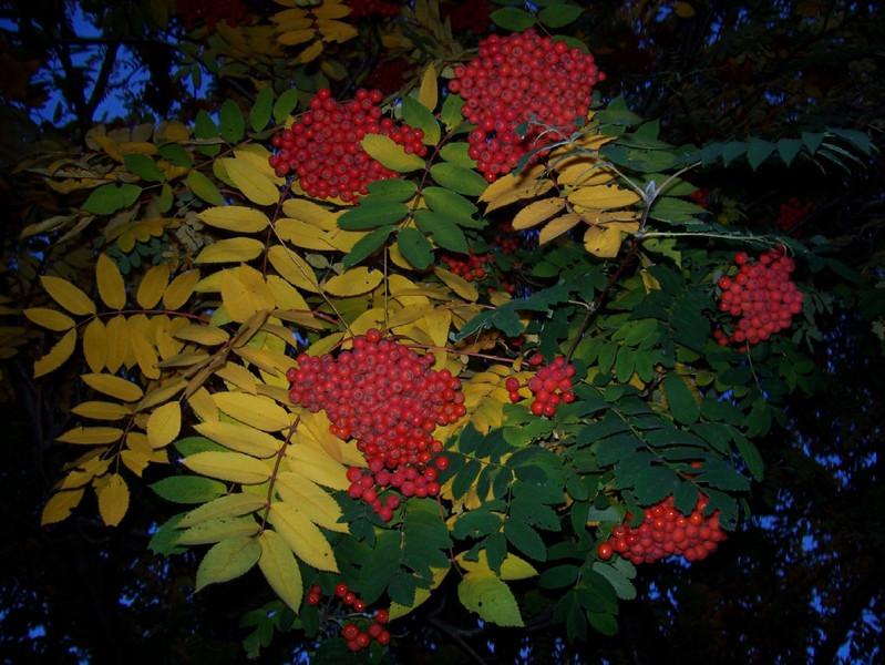 I-CO-Fall_Foliage-AndersonJ