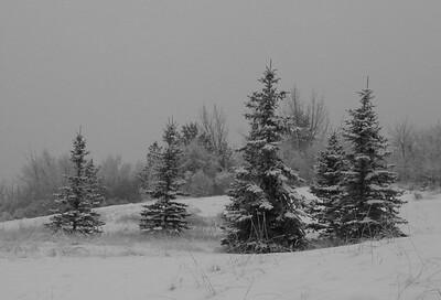 I-BW-Winter_Grouping-Holtkamph