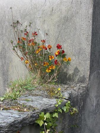 I-CO-Grow_Where_Youre_Planted-Holtkamph