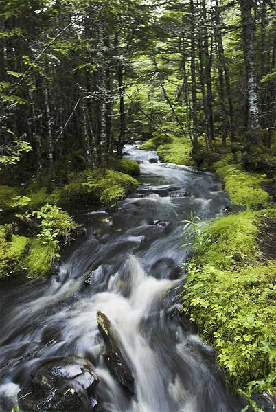 Flow River Flow A. Carino