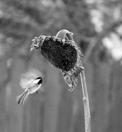 I-BW-Caught_In_Flight-LongJ