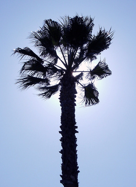 I-CO-Back-Light-Palm-Long F