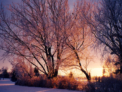 I-CO-Hoar_Frost_Sunset-FransonG
