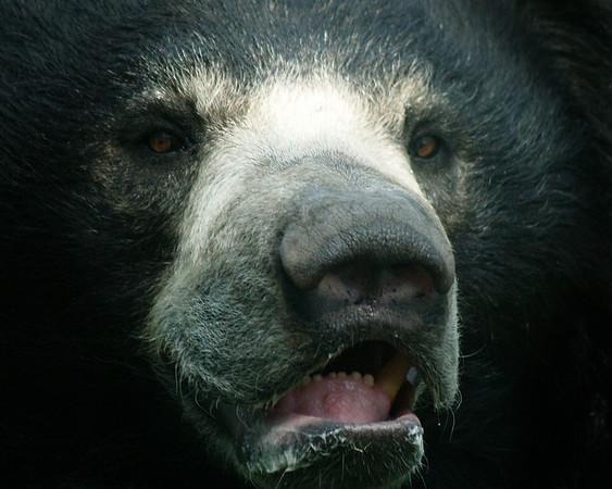 I-CO-Bear-OBrienJ