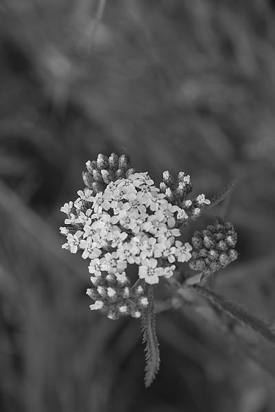 I-BW-Gental Beauty in Nature-Valerie Ellis-jpeg