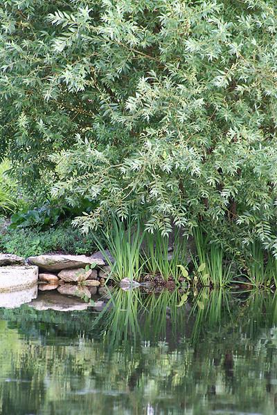 A-CO-Peaceful Reflection-EllisV