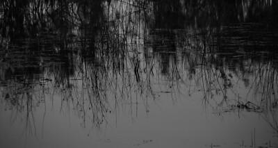 I-BW-Monet Reflection-HoltkampH-jpg