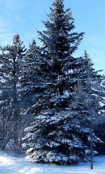 I-CO-A_Winter_Walk-LongF