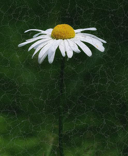 I-CR-Wildflower_painting-HoffortA