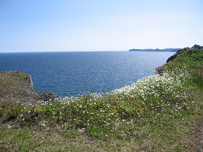 I-CO-Flowers and Sea-Maitland-WhitelawB