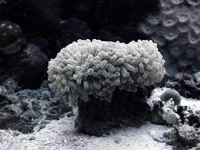 I-CO-Sea Life-OBrienJ