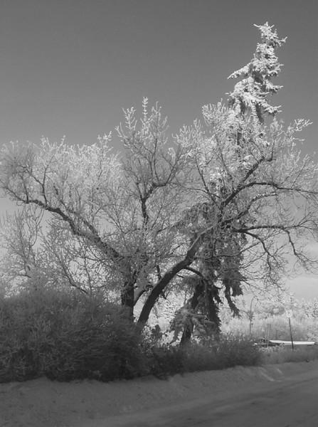 I-BW-Frost-ReadD