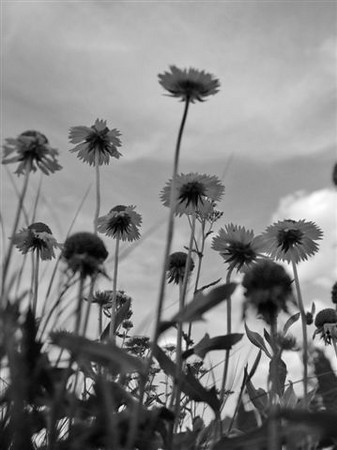 BW-Parasol_Place-BrownH