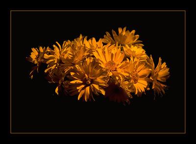 CO-Golden_Glow-HagaM