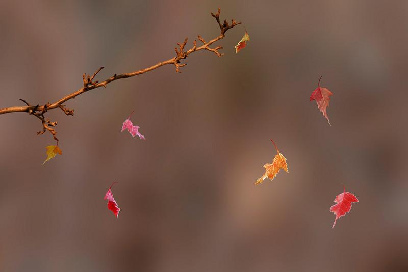 CR_Autumn-Leaves_HagaM