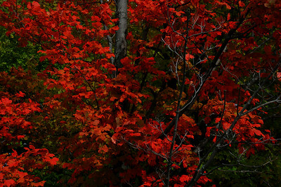 Winner of the Color Print of the Year (best print submission from the clinics as voted by the members)  Red Fall in the East by Wayne Corbett