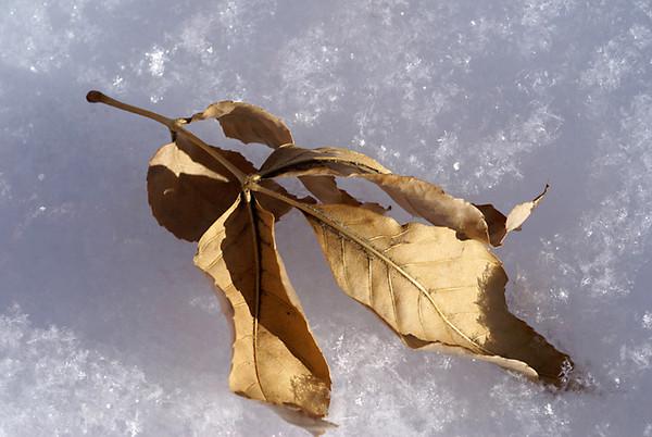 CO-Winter_Sunlight-BuckleJudith