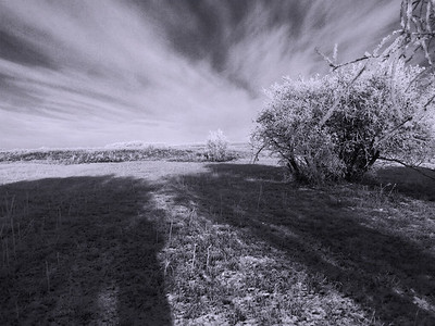 BW-Frosty_Friday_Sun_and_Shade-FransonG