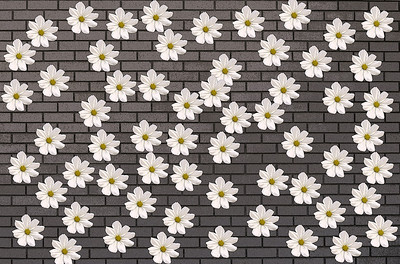 CR-Counting_Flowers_on_the_Wall-HagaM
