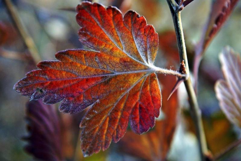 TR-Fall In Full Bloom-Brenda Rose Bellenie-Wynne