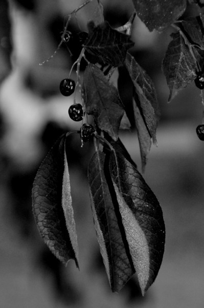 BW-October's Leaves-Anita Simpkins