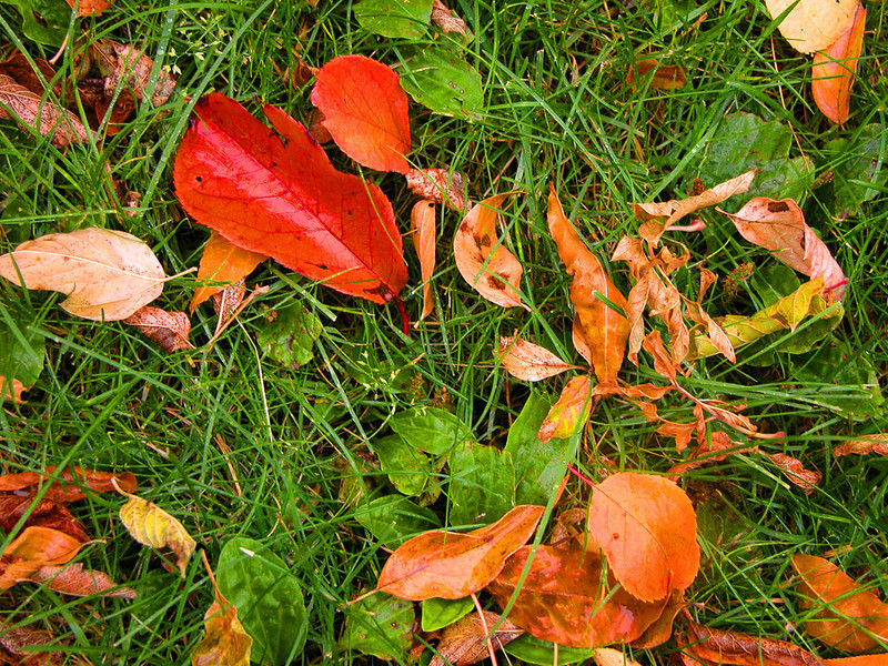 TR-Autumn Colors-Emily Schindel